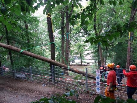 Anheben eines 800 kg schweren Baums