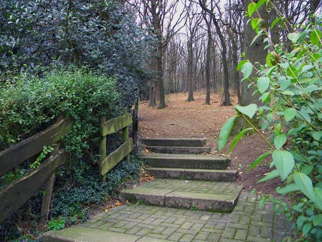 Waldstück am Vereinshaus